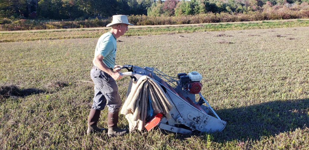 Dry Harvesting Cranberries